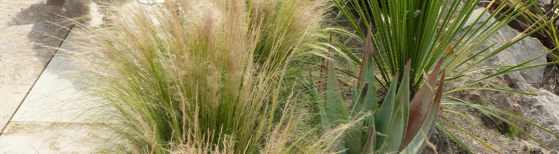 El mite del jardí sense manteniment