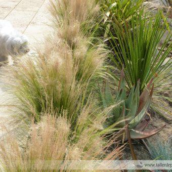 (CAT) El mite del jardí sense manteniment