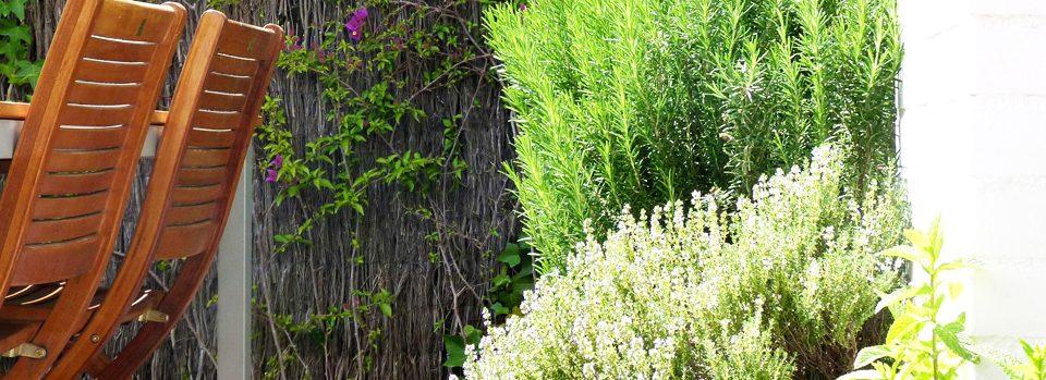 Plantes aromàtiques Sant Just Desvern